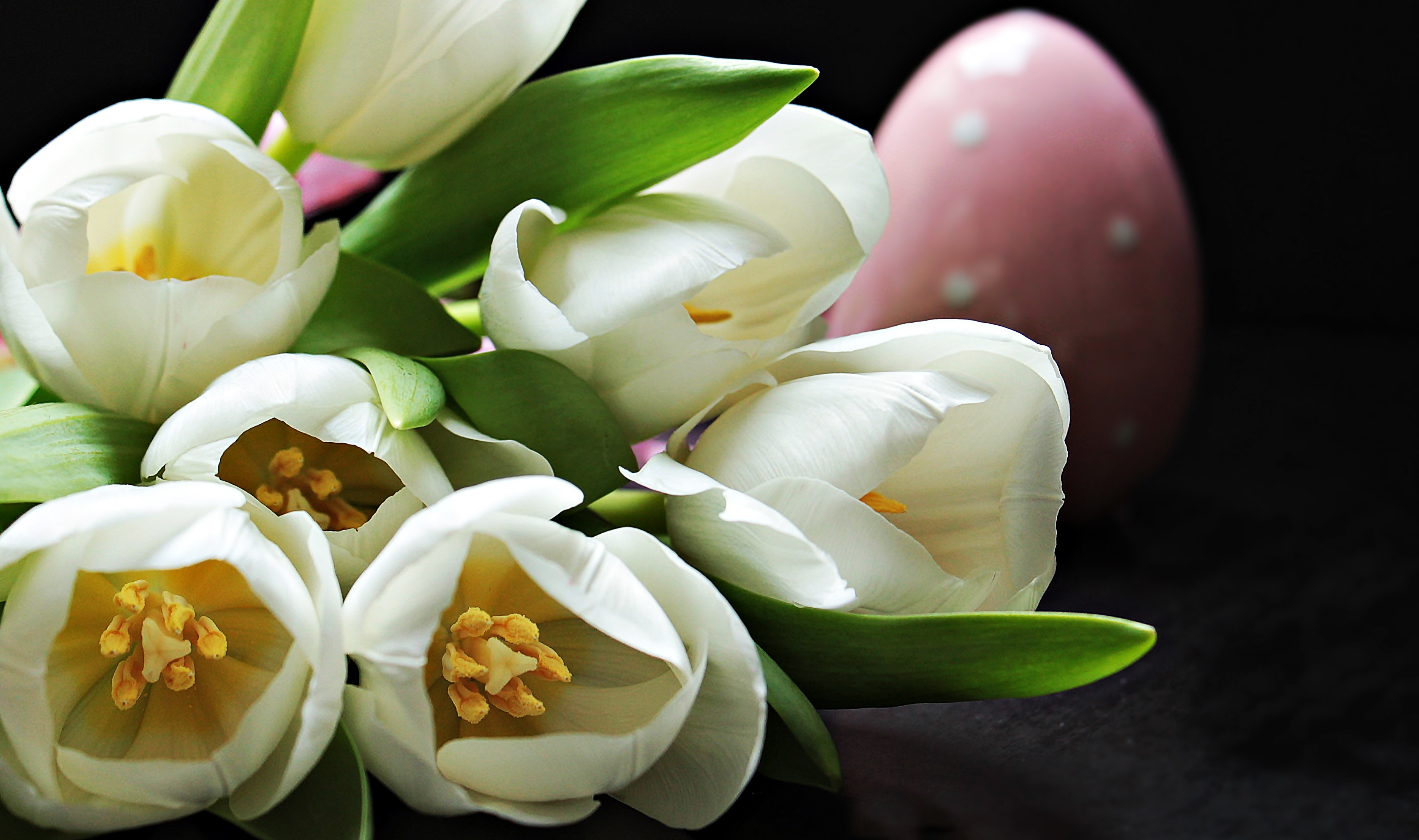 A photo of five white tulips and with a pink Easter egg in the background